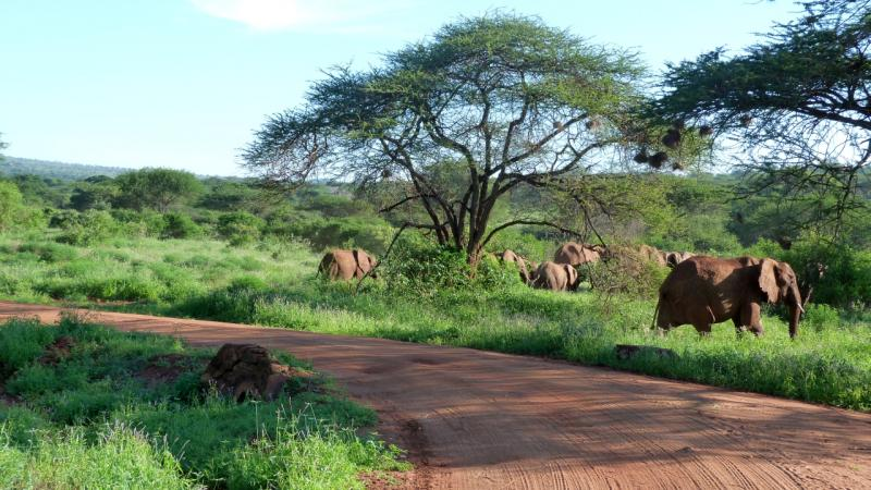 Kenia (c) rk-wiedamann-media